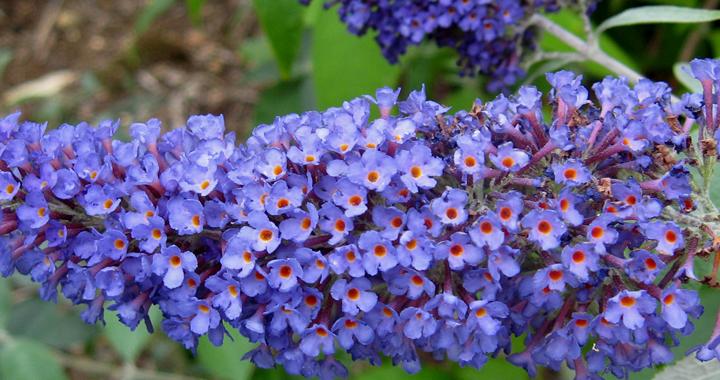 Nu planten…in april