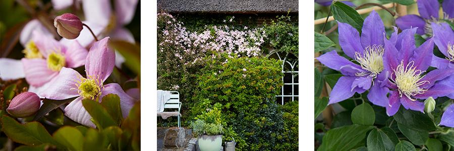Lelies in de tuin