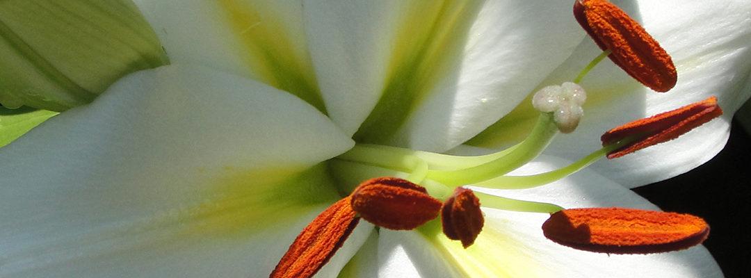Planten in augustus
