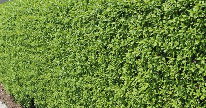 April: planten